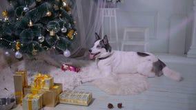 Perro que espera un regalo debajo del árbol de navidad HD metrajes