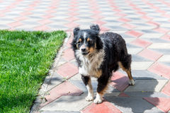 Perro que guarda a la yarda de los ladrones canino Perro al aire libre imagenes de archivo