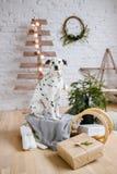 Perro que guarda los regalos de la Navidad Foto de archivo