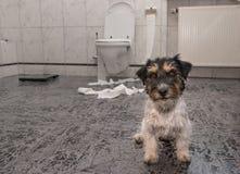 Perro que hace el lío - terrier de Russell del enchufe del caos en el cuarto de baño imagenes de archivo