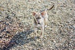 Perro que hace pis en la playa fotografía de archivo libre de regalías