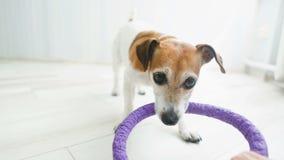 Perro que juega activo en casa Imágenes de vídeo corrección del comportamiento almacen de video