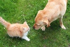 Perro que juega con el gatito Imagen de archivo