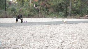 Perro que juega con los juguetes en la arena almacen de metraje de vídeo