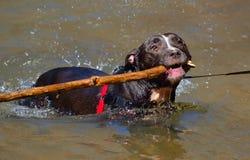 Perro que juega en el río Foto de archivo libre de regalías