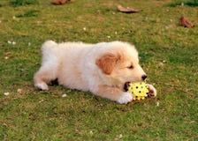 Perro que juega en la hierba Imagen de archivo