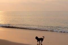 Perro que juega en la playa Foto de archivo