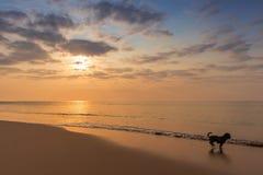 Perro que juega en la playa Imagen de archivo