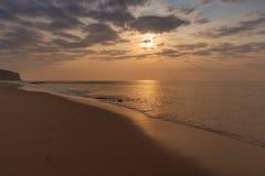 Perro que juega en la playa Imágenes de archivo libres de regalías
