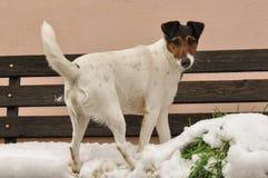 Perro que juega en nieve imagen de archivo