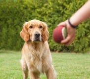 Perro que juega la bola con un niño Foto de archivo