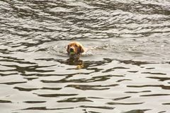Perro que juega la captura en el agua fotos de archivo libres de regalías