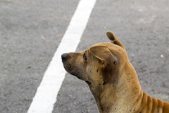 Perro que juega sonrisas exteriores Imagen de archivo