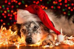 Perro que lleva el sombrero de santa con las luces de la Navidad Fotos de archivo