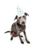Perro que lleva el sombrero del partido de Pawprint Imagen de archivo libre de regalías
