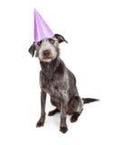Perro que lleva el sombrero púrpura del partido Imagen de archivo libre de regalías