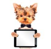 Perro que lleva un arco del cuello con PC de la tableta Imagen de archivo