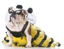 Perro que lleva un traje de la abeja Imágenes de archivo libres de regalías