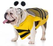 Perro que lleva un traje de la abeja Imagen de archivo