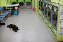 Perro que miente en el piso de una lavandería de otra manera vacía foto de archivo libre de regalías