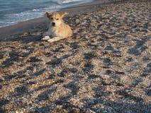 Perro que miente en la playa Fotos de archivo libres de regalías