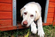 Perro que mira afuera de perrera fotos de archivo libres de regalías