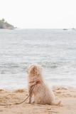 Perro que mira el mar imagen de archivo