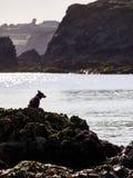 Perro que mira el mar Fotografía de archivo libre de regalías