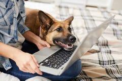 Perro que mira la pantalla del ordenador portátil foto de archivo libre de regalías