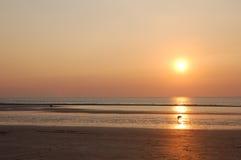 Perro que mira la puesta del sol? Fotos de archivo libres de regalías