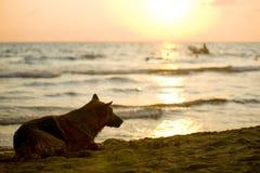 Perro que mira la puesta del sol Imagen de archivo libre de regalías