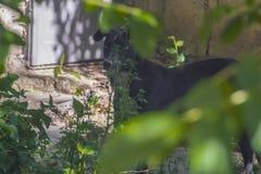 Perro que oculta detrás de arbustos en la calle Imágenes de archivo libres de regalías