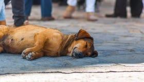 Perro que pone en el piso y dormir imagen de archivo libre de regalías