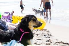 Perro que pone en la playa Fotografía de archivo libre de regalías