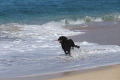 Perro que practica surf en la playa imagenes de archivo