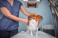 Perro que recibe una radiografía en una clínica veterinaria imagen de archivo