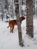 Perro que se coloca en bosque Imagen de archivo libre de regalías