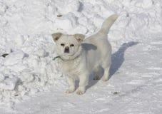 Perro que se coloca en nieve Fotos de archivo libres de regalías