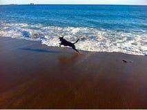 Perro que se ejecuta en agua Foto de archivo libre de regalías