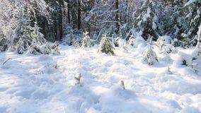Perro que se ejecuta en la nieve