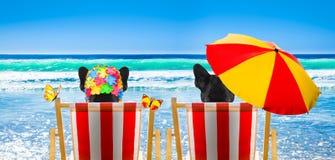 Perro que se relaja en una silla de playa imagen de archivo libre de regalías