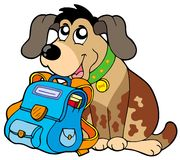 Perro que se sienta con el bolso de escuela Imágenes de archivo libres de regalías