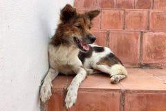 Perro que se sienta en la escalera roja en el templo Imagen de archivo libre de regalías