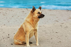 Perro que se sienta en la playa Imagenes de archivo