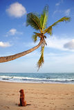 Perro que se sienta en la playa Imagen de archivo libre de regalías