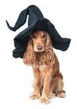 Perro que se sienta en un sombrero de las brujas imagenes de archivo