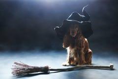 Perro que se sienta en un sombrero de las brujas Imagen de archivo libre de regalías