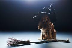 Perro que se sienta en un sombrero de las brujas Foto de archivo