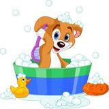 Perro que tiene un baño Imágenes de archivo libres de regalías