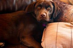 Perro que toma una siesta en el sofá foto de archivo